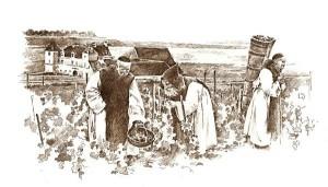Moines de Citeaux dans les vignes